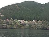 芦ノ湖西岸