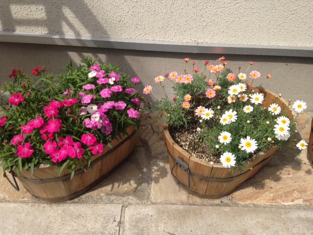 玄関先の春